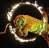 Цирки в Ферзиково