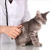 Ветеринарные клиники в Ферзиково
